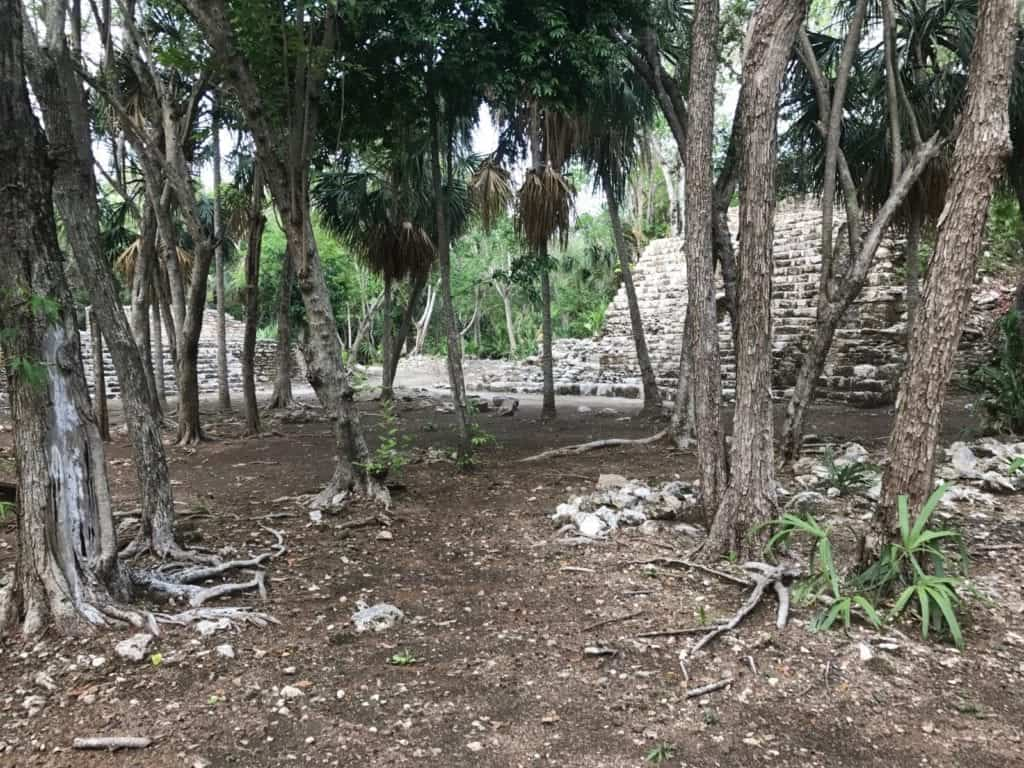 Walking through the jungle to find ancient ruins at Oxtankah. Photo by Bill Thompson.