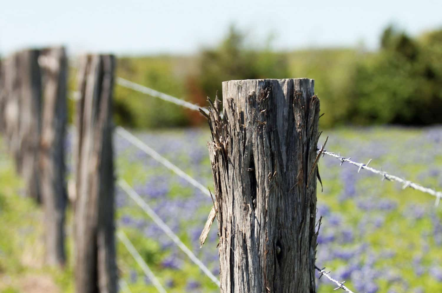 A fence and bluebonnets in The Texas Hill Country region.